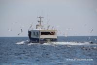 Bateau de pêche au large du Guilvinec (29)