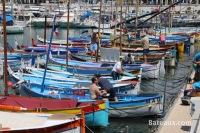 Pointus sur le port de Nice - 4