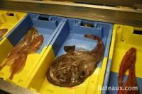 Caisses à poissons