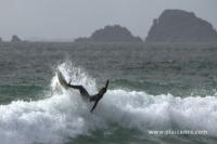 Surf en bretagne - La Palue (29) - 42