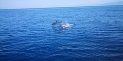 Dauphins du monde